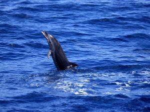 A la decouverte des dauphins 07