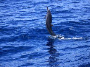 A la decouverte des dauphins 08