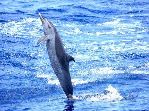 A la decouverte des dauphins 04