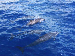 A la decouverte des dauphins 03