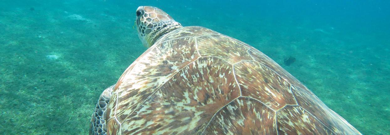 sortie snorkeling en catamaran Martinique