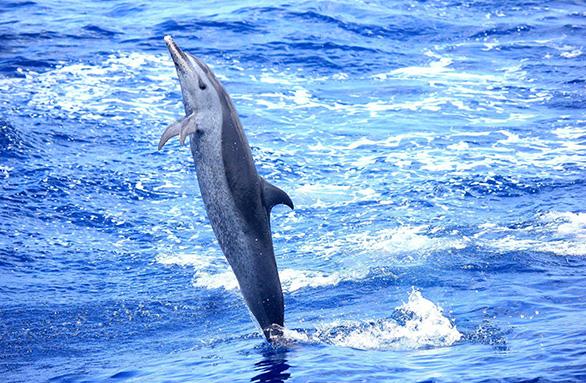Excursions catamaran en Martinique