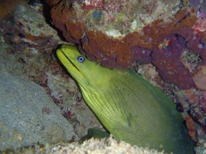 Plongee 15