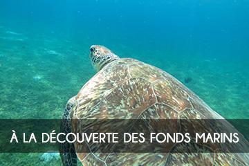 A la découverte des fonds Marins de la Martinique