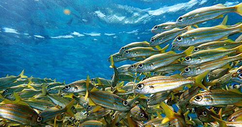 Croisière en catamaran dans les caraibes : langue parlée et devise utilisée